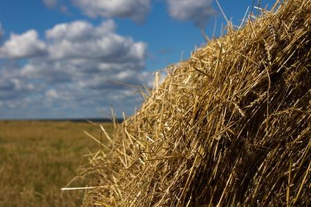 field and sky: Paja de Agricultura se reunieron en una cosecha campo cielo gavilla. Naturaleza d�a de sol Foto de archivo
