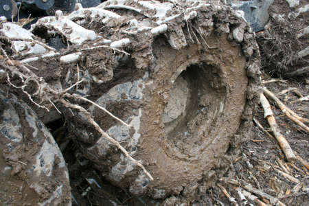 dirty tractor tracks, work in the forest, wet soil