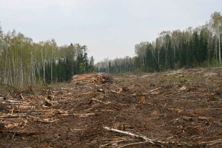 A clearing in a cut-down forest. The destroyed Khimki forest in Russia, the laying of the highway