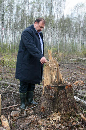 Politician Gennady Gudkov inspects a felled tree in the Khimki forest