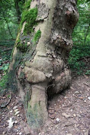 particolare: Particolare paesaggio: tronco d'albero inclinato