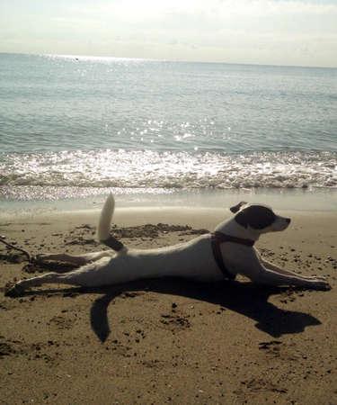 us sizes: gay, beautiful dog, while sunbathing lying on the seashore Stock Photo