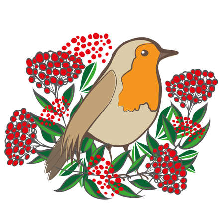Beautiful Robin Redbreast and cotoneaster berries and leaves. Isolated vector illustration. Garden bird sitting amongst lush foliage and shrub fruit. Winter nature wildlife design for greeting cards