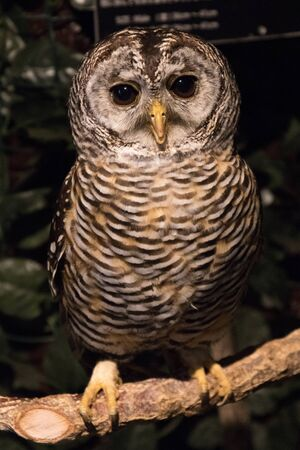 Close-up of owl in captivity