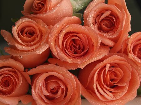 coral roses bunch Stock Photo - 2300449