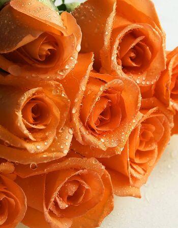 水滴を持つトリミング バラのサンゴの束