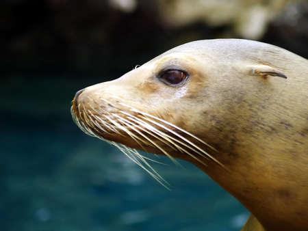 Seal Cub Stock Photo