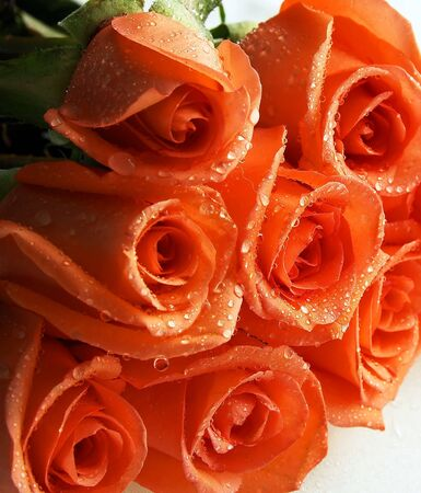 stacked coral roses