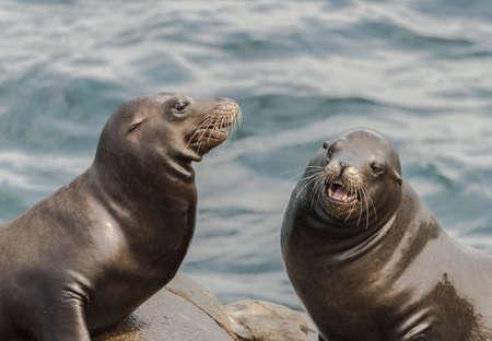 Two sea lions sitting on the rocks in La Jolla, California