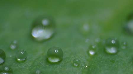 Water drops on a water lily leaf