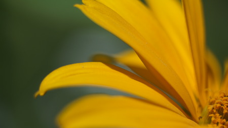 Close up yellow cone flower blossom in the garden