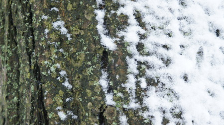 Frozen tree branch. snow on tree snow and branch texture background