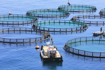 water fish: Fish farm