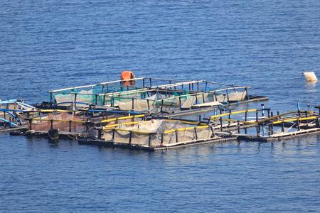Fish farm photo