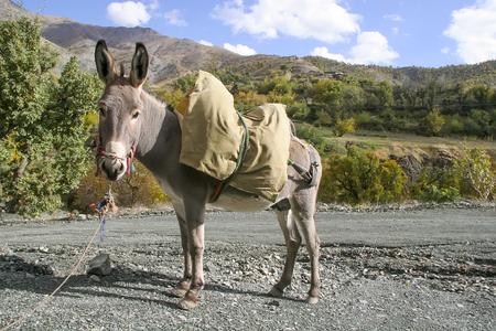 Donkey Фото со стока