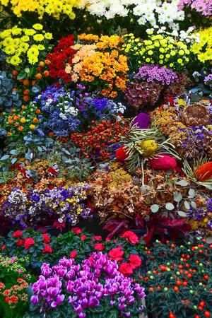 ramblas: Flowers in Rambla market, Barcelona Stock Photo