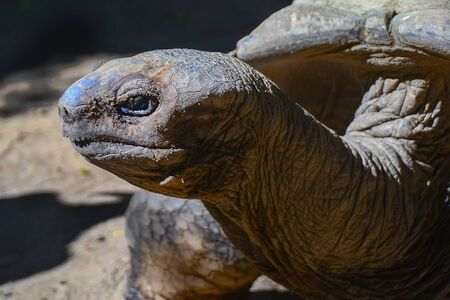 seychelles: Giant turtles from Seychelles Stock Photo