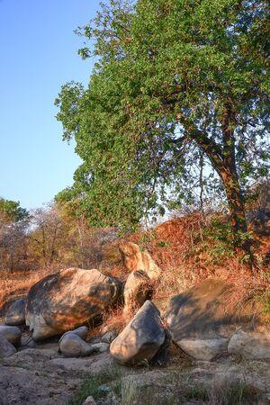 Afrikanische Landschaft im Krüger Nationalpark, Südafrika