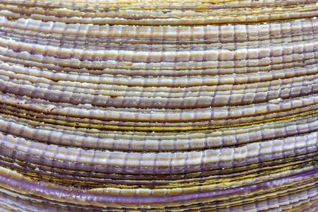 heart shaped: Sea shell - detail