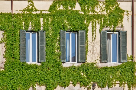 decorative balcony: Facade of an old building in Rome, covered by ivy.