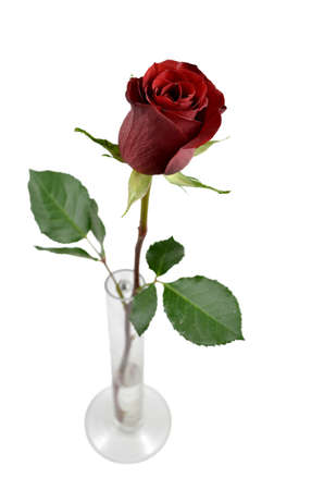 single red rose: Red rose in a vase isolated on a white background