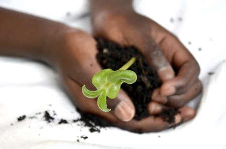 tissu blanc: Childs mains tenant des plantes contre drap blanc. DOF peu profond. Banque d'images