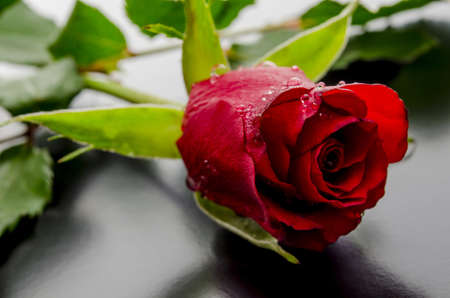 Beautiful red rose with dew drops lying on a black background  photo