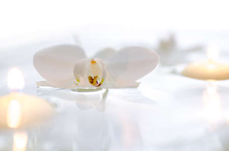 copyspace: Orchid flower and candles floating on the water  With white background