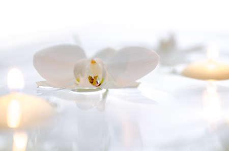 orchidee: Orchidea fiori e candele galleggianti in acqua con sfondo bianco