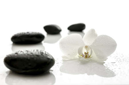 White orchid flower and black spa stones with water drops