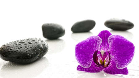 pink orchid: Massage stones and violet orchid flower with water drops