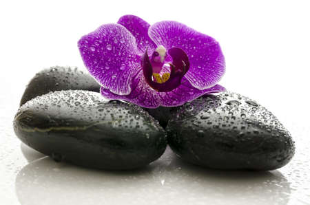 Violet orchid flower on black spa stones with water drops