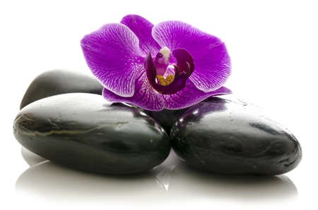 Violet orchid flower on black spa stones  Isolated over white background  photo