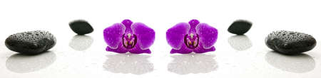 basalt: Massage stones and orchid flower with water drops representing a wellness concept  Stock Photo