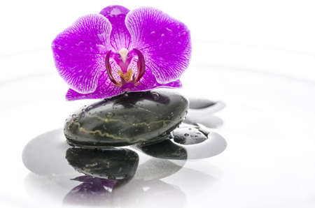Violet orchid flower and black stones in water  photo