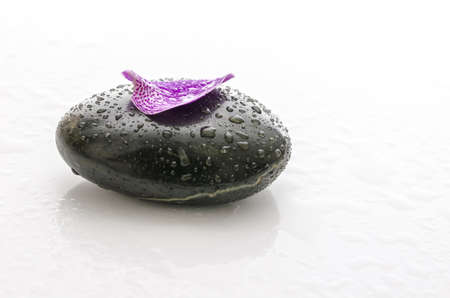 basalt: Purple petal with water drops on a black spa stone  Stock Photo