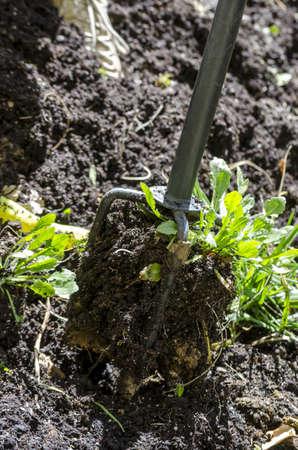 weeding: Detail of gardening tool loosening soil and getting rid of weeds  Stock Photo