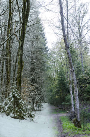 changing seasons: Collage of forest trail photographed in spring and winter.