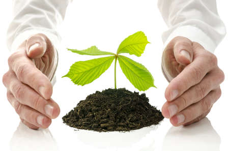 Male hands around new plant growing from pile of soil. Concept of alternative healing.