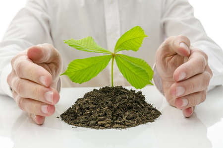 New plant growing from pile of soil with hands around it  Concept of new life  Stock Photo - 19474266