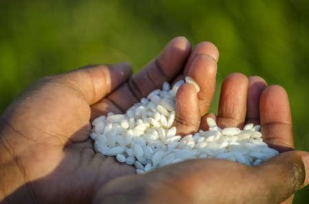 gente pobre: Primer plano de el arroz holding ni�o africano. Concept del hambre en �frica.