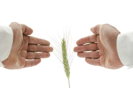 Male hand around wheat ear. Concept of alternative healing. Stock Photo - 20824668