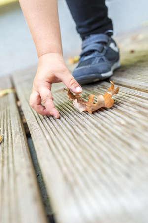 Closeup of baby boy picking up brown autumn leaf. photo