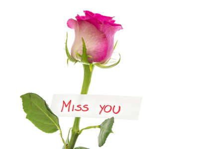 Card with Miss you message attached to beautiful pink rose. Isolated over white background. 版權商用圖片