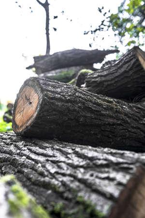sawed: Heap of several logs.