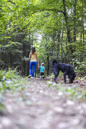 walk in: Young mother and her toddles son on a walk in beautiful woods with their black dog. Stock Photo