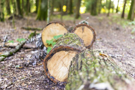 sawed: Tree trunk sawed into fire logs. Stock Photo