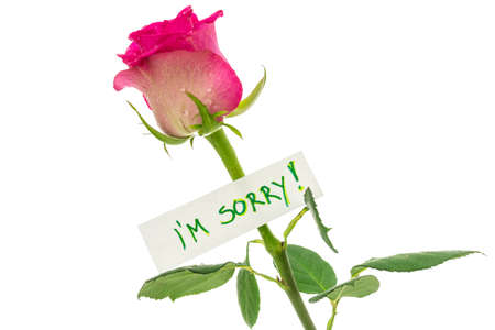 i am sorry: I am sorry card on beautiful pink rose. Isolated over white background. Stock Photo