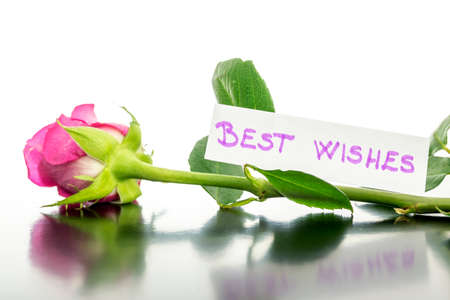 best wishes: Beautiful pink rose lying on a desk with Best wishes message attached to it.