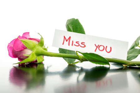 miss you: Pink rose with Miss you message. Stock Photo